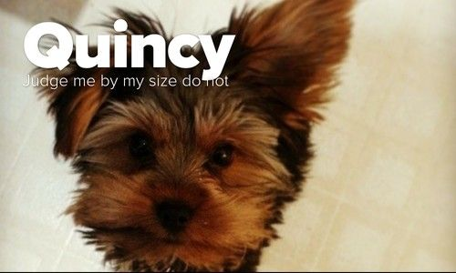 Check out Quincy on Pack