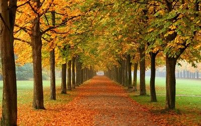 Row Of Autumn Trees Hd Wallpaper Autumn Trees Modern Wall Canvas Tree Hd Wallpaper