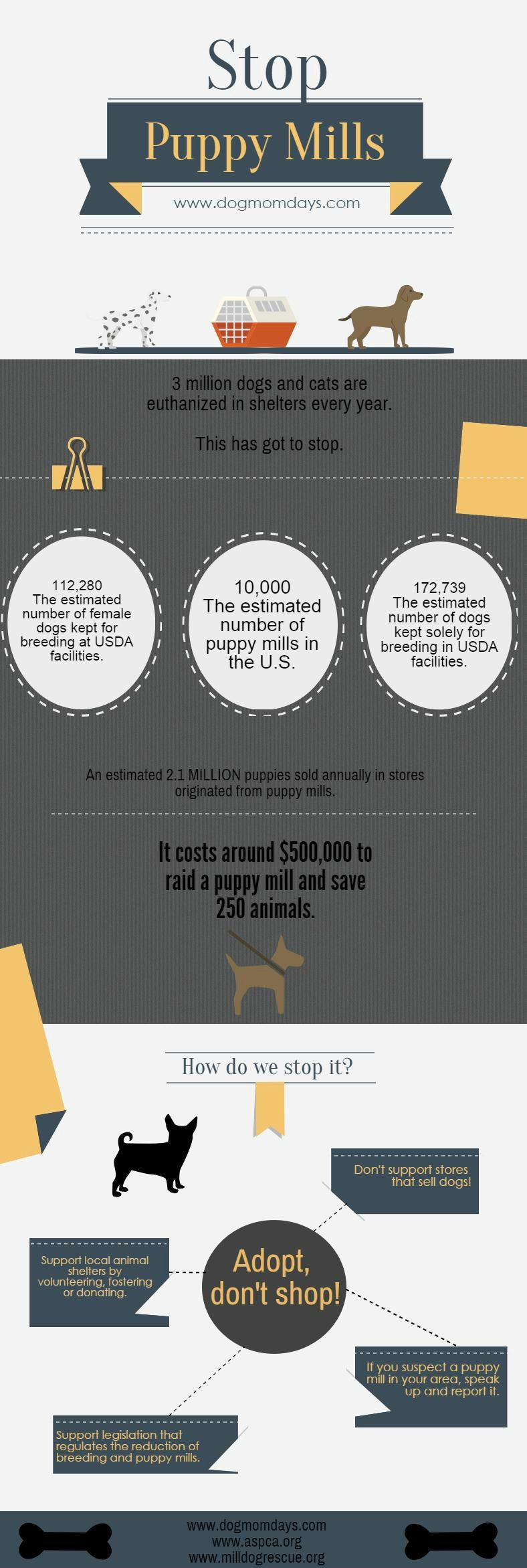 how to start a puppy mill