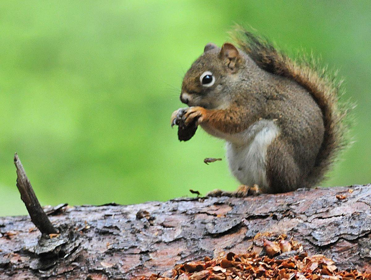 squirrel animal messages totems spirit animals com additional