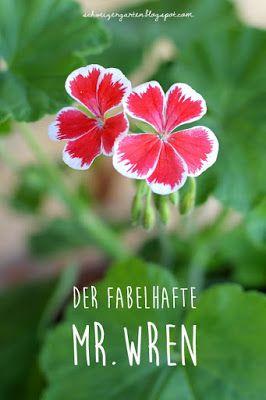 Der Fabelhafte Mr Wren Ein Schweizer Garten Balkonkasten