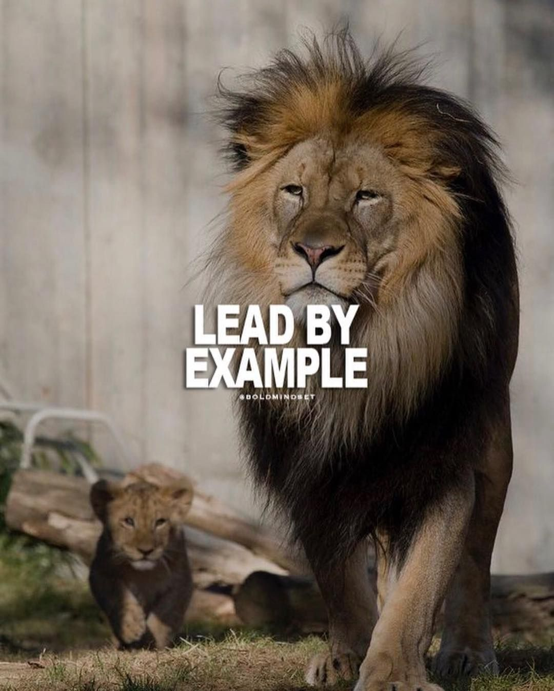 Inspirationalquotes Motivationalquotes Positivevibes Positivequotes Positiveenergy Inspirationdaily Life Lion Quotes Warrior Quotes Be An Example Quotes