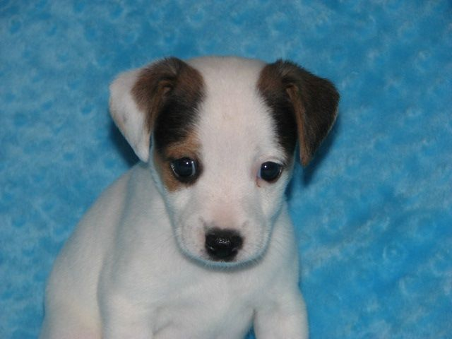 Another Beautiful Puppy From Sweetbriar Kennel In Alabama This Is