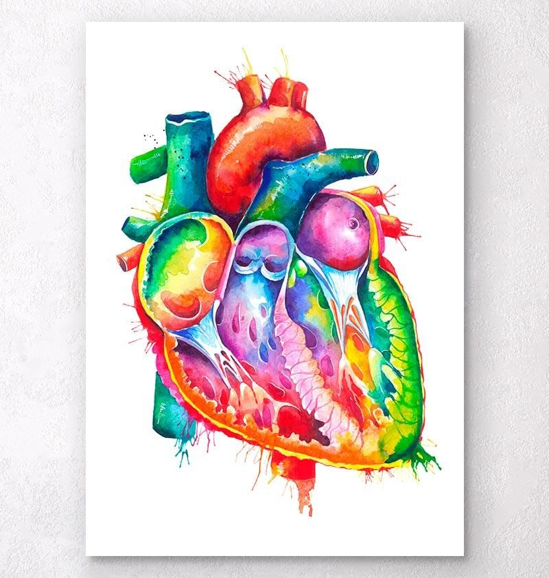Anatomical Heart Art Watercolor Splash Biology Art Anatomy