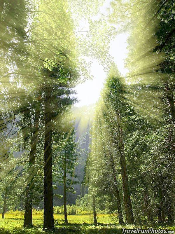 Glorious Sunrise On The Meadow Beautiful Sequoia