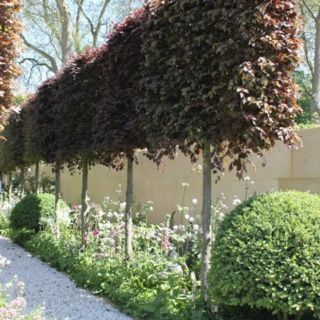 Garden Screening Ideas Bamboo