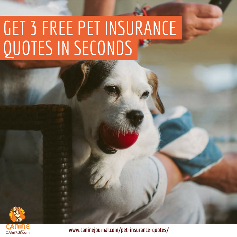 What S The Best Pet Insurance Company For 2020 With Images Pet