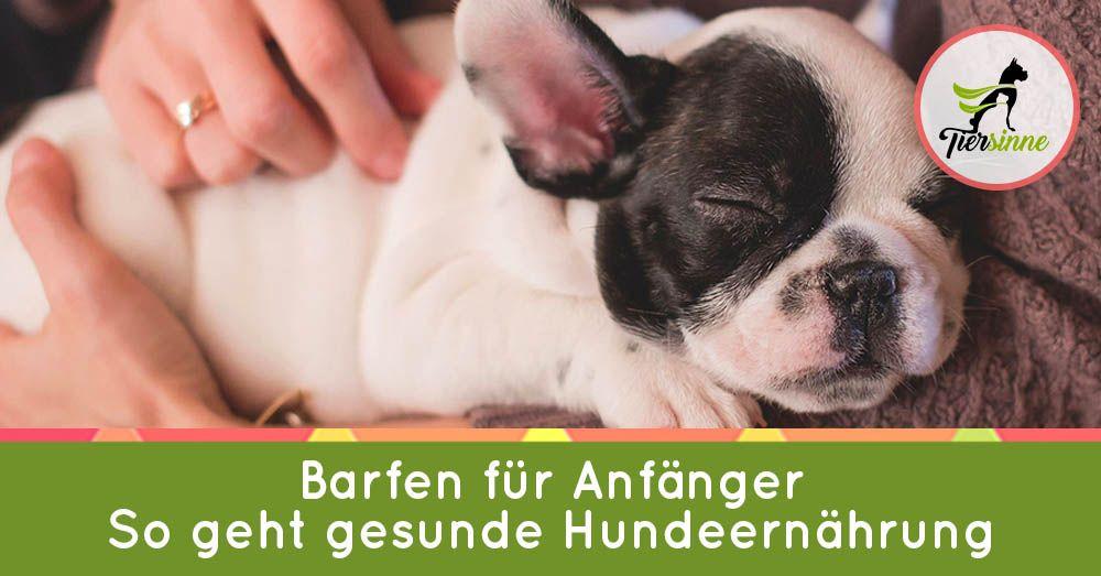 Barfen Für Anfänger Hunde