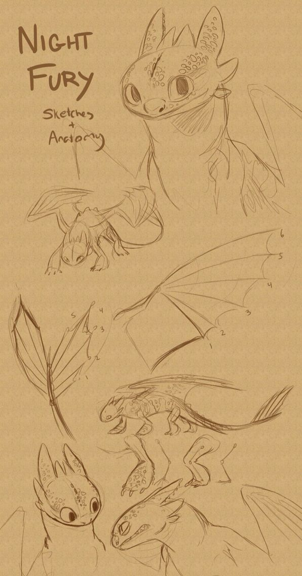 Drawing Night Fury : drawing, night, Night, Anatomy, Train, Dragon,, Dragon, Sketch,