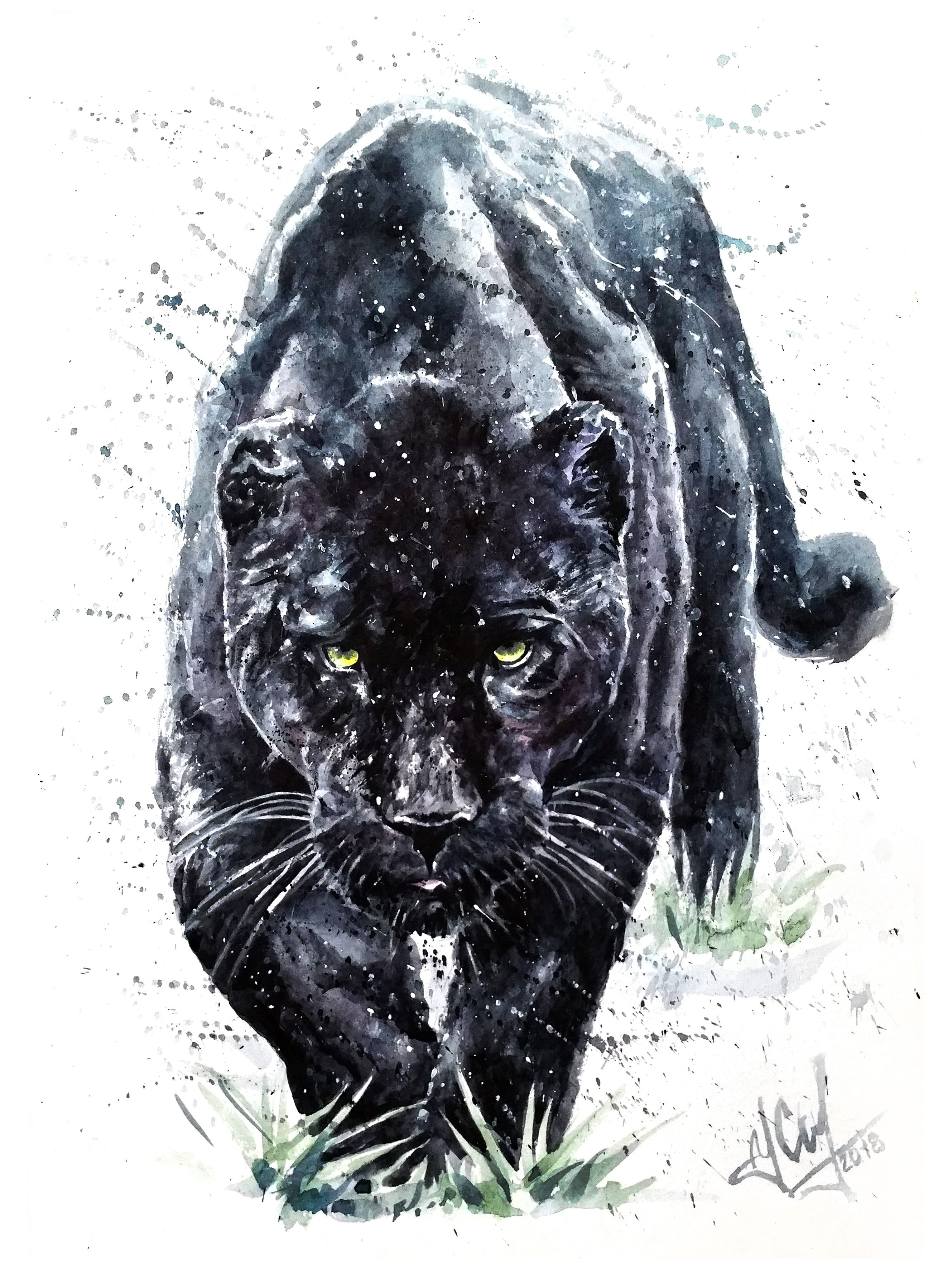 aa008d2698558 panther, black, watercolor, jaguar, background, animal, white ...
