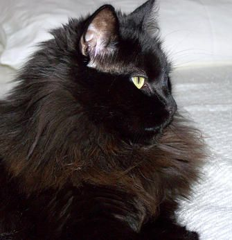Black Fluffy Cat Names