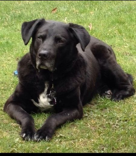 Show your support for BC SPCA by voting for Harley in the BC SPCA Calendar Contest