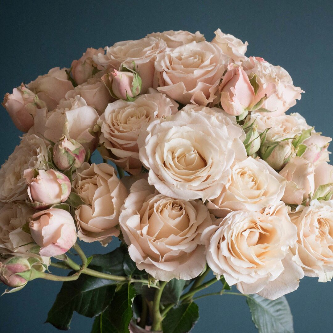 Meet Sahara Sensation one of the newest spray rose offerings. This ...