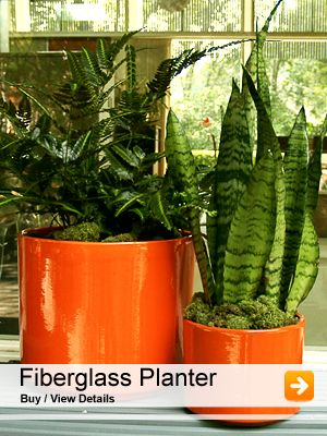 Home page 1 | Planters By Type | Plant nursery, Plants