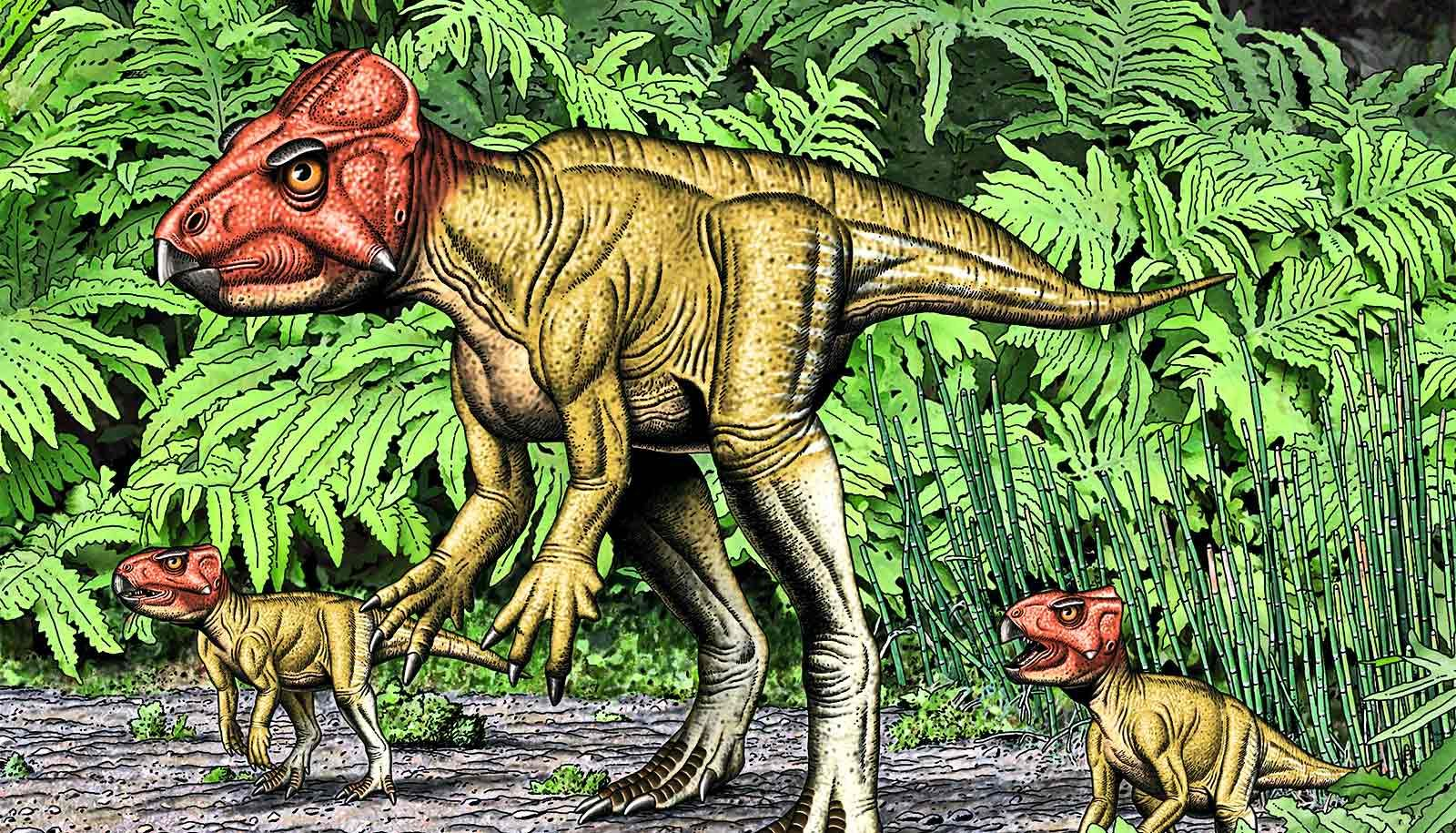Small Triceratops relative walked on two feet Futurity