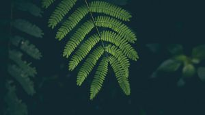 Preview wallpaper fern, leaf, plant, green 1920x1080