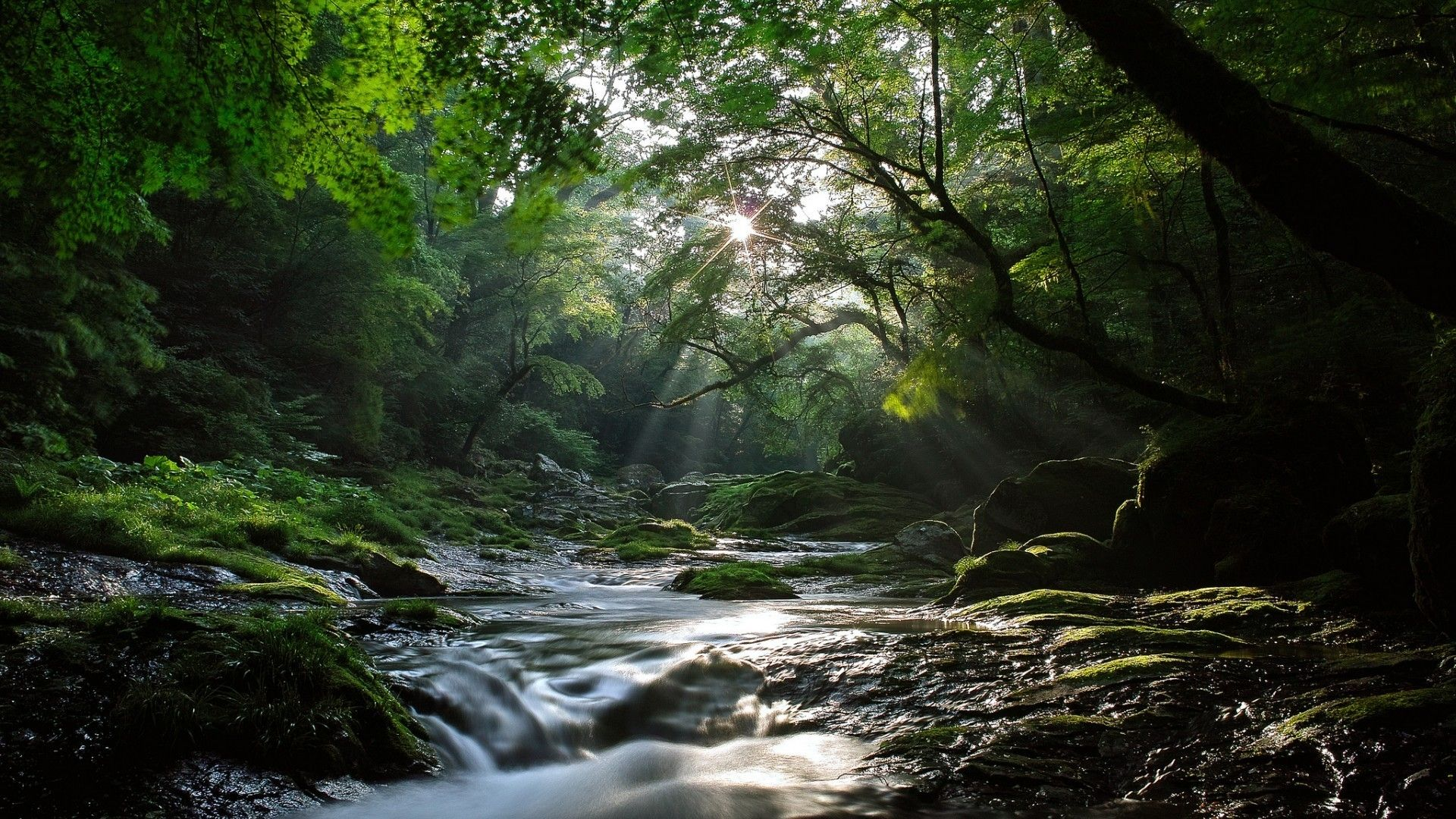 Forest Landscape With River Reference Rivers Of Living Water Beautiful Forest Vacation Trips