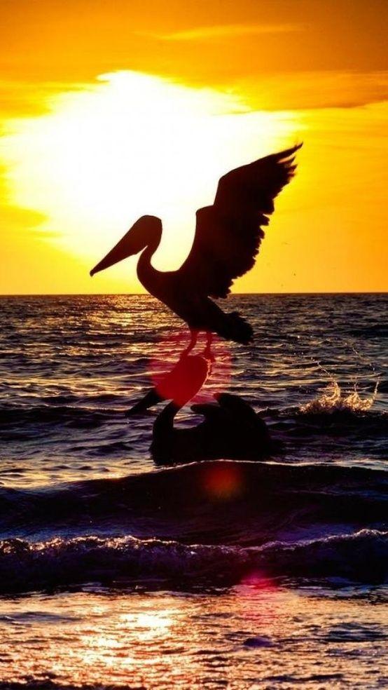 Napoles Sunset Florida Estados Unidos