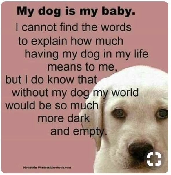 Pin By Sean Morlock On Describing Me Pinterest Dogs Animals And