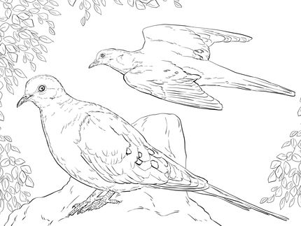 Click To See Printable Version Of Two Mourning Doves Coloring Page