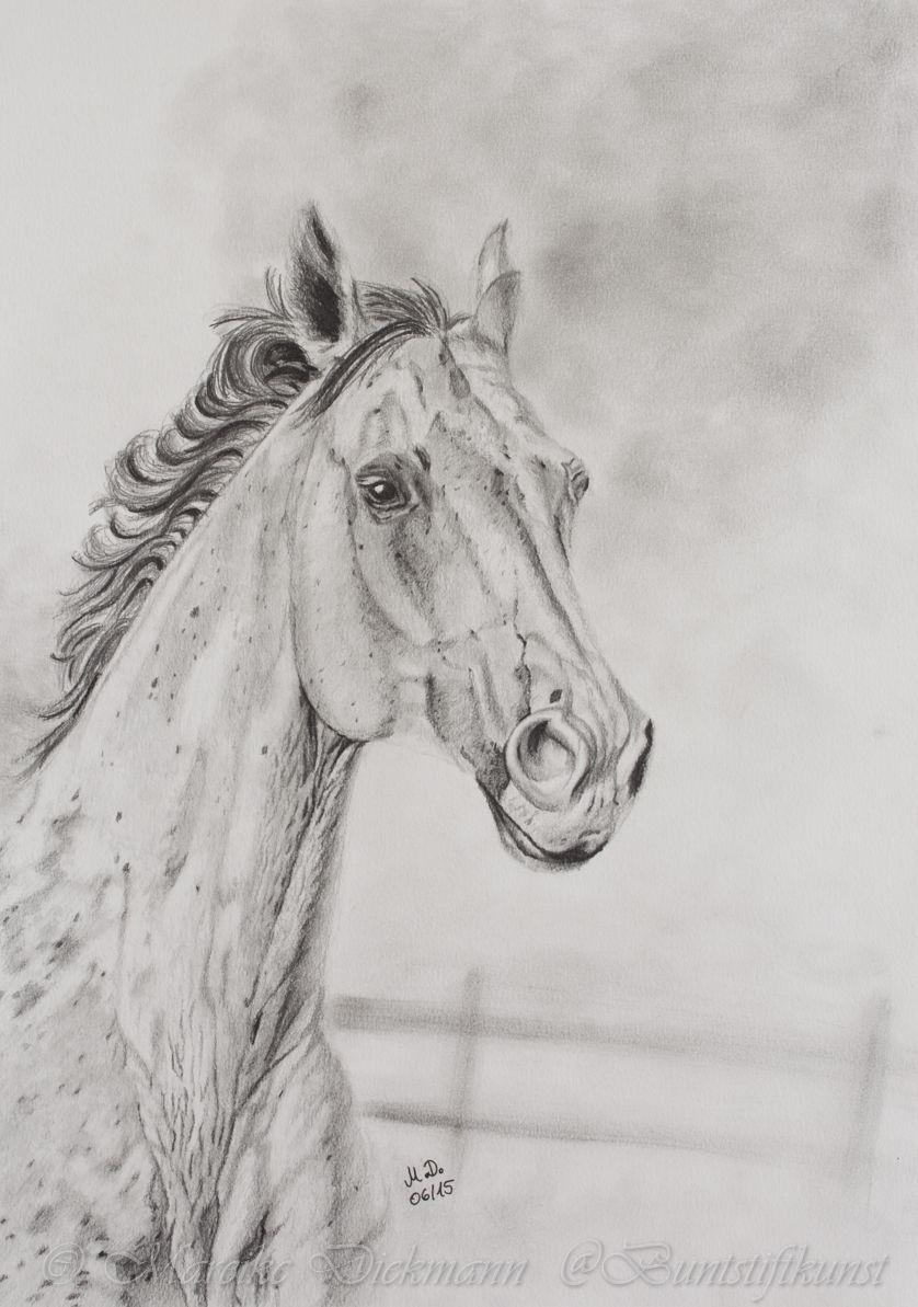Horse Drawing In Graphite Pferd Zeichnung Mit Bleistift