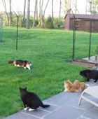I would love to get this fence to give cats a nice roaming space without letting them run free in the neighborhood.