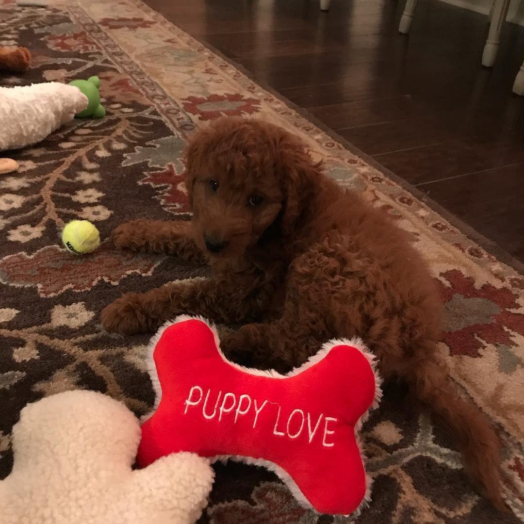Cooperthesuperdood on instagram puppy love with images