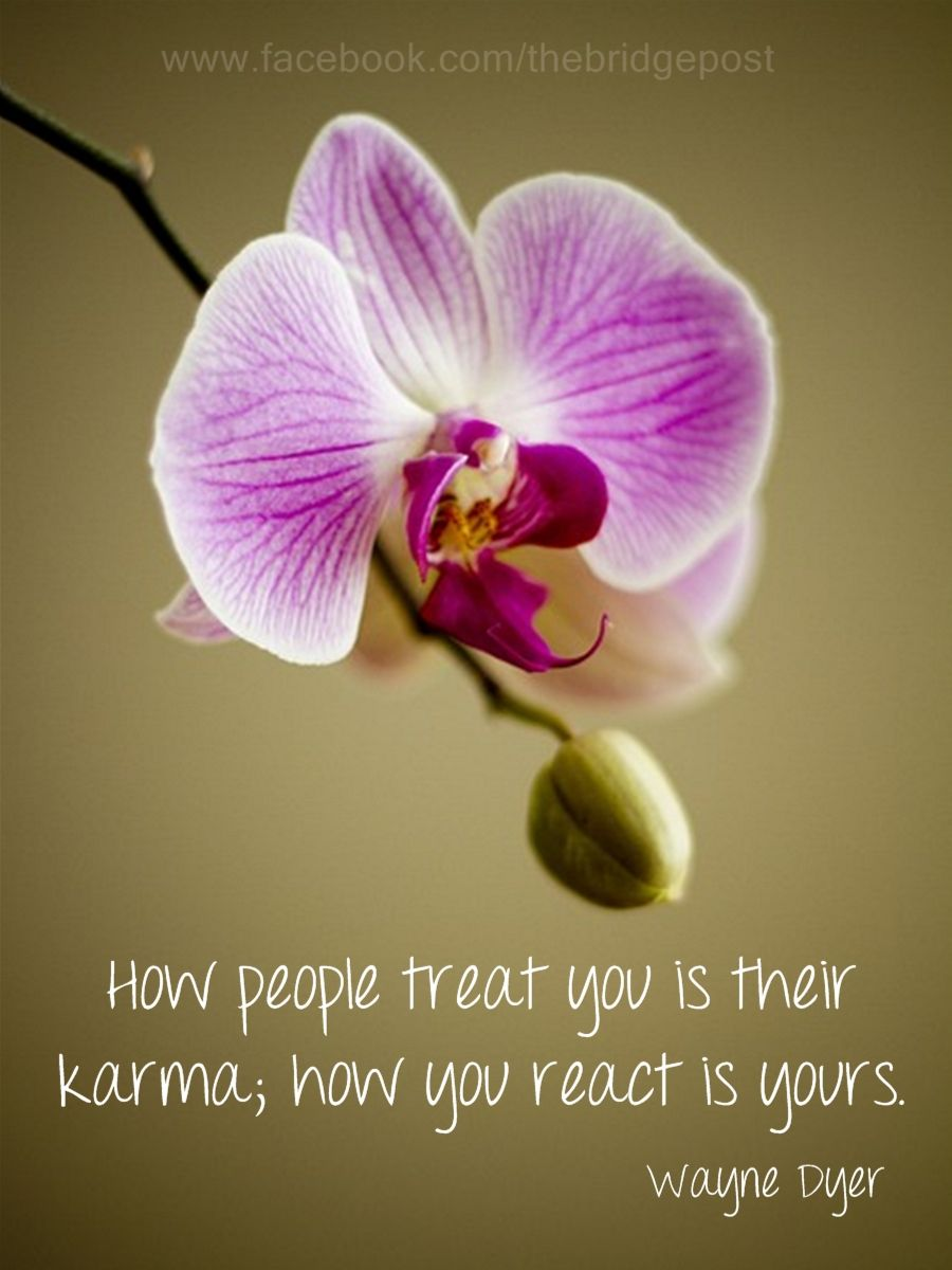 Orchid and quote Inspiration Pinterest Wayne dyer Quotes and