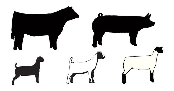 Showing Livestock Livestock Animal Silhouette