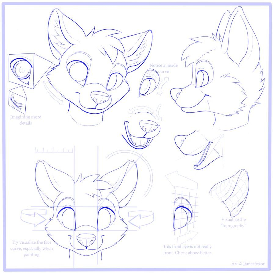 Line Drawing Tutorial : Furry face tutorial google search tutorials references