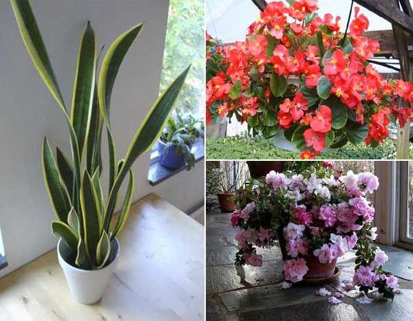 12 plantas de interior que purifican el aire de nuestra casa - Plantas de interior que purifican el aire ...
