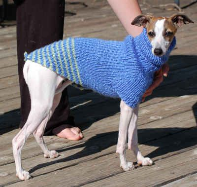 Ravelry - Italian Greyhound Sweater; Graceleb (also Side Button ...