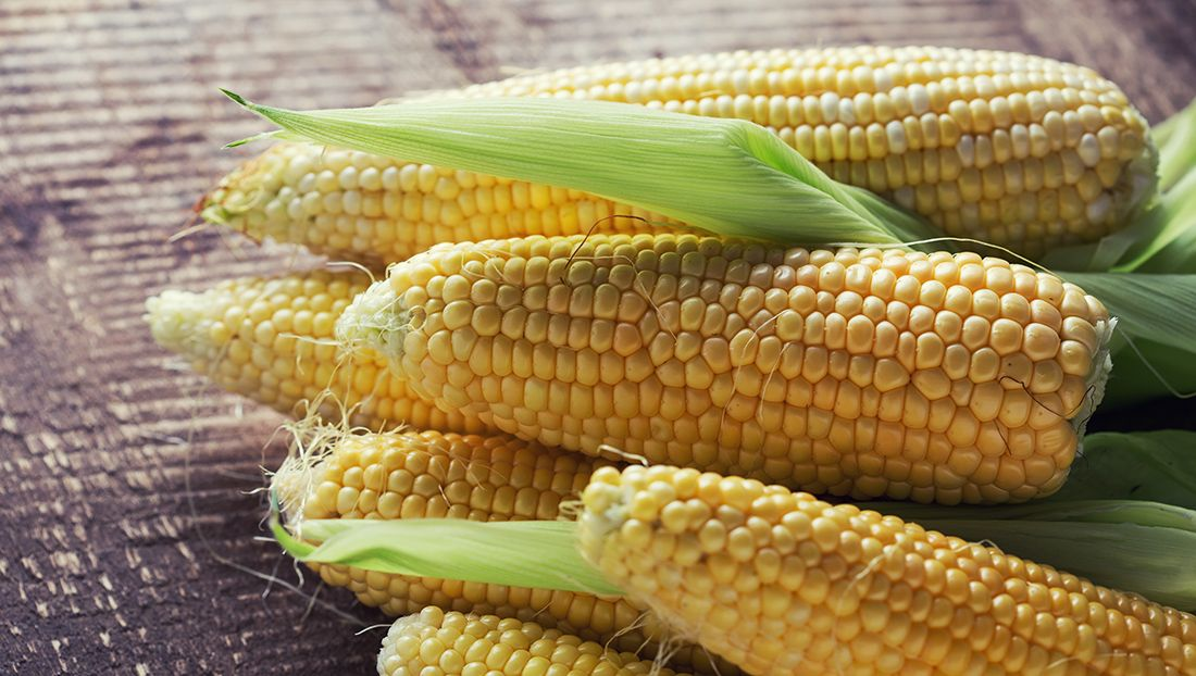 Кукуруза Початок Для Похудения. Какую кукурузу можно есть при похудении