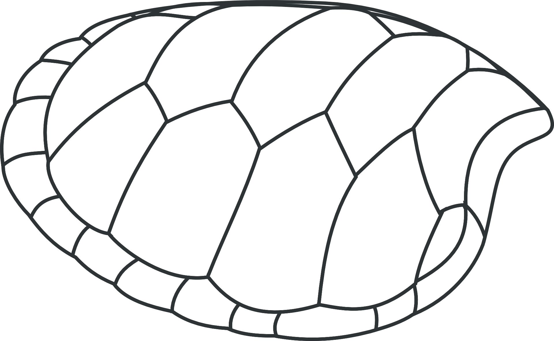 Https Pixabay Com Get 55e4d5464e4fad00f5d8992cc02d3f781237dbf85257714870287dd2954f 1920 Png Turtle Shell Shell Drawing Clip Art