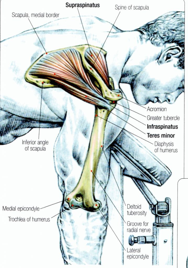 Stretching: How to Stretch the Rotator Cuff #exercise | Oh so fit ...