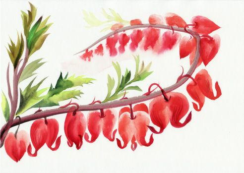 Bleeding Hearts Flowers Vector Art Illustration Bleeding Heart Flower Flower Illustration Flower Vector Art