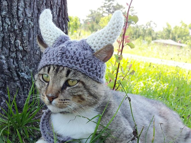 2017-2018 Winter Knitted Hat Collection For Pets | Gato