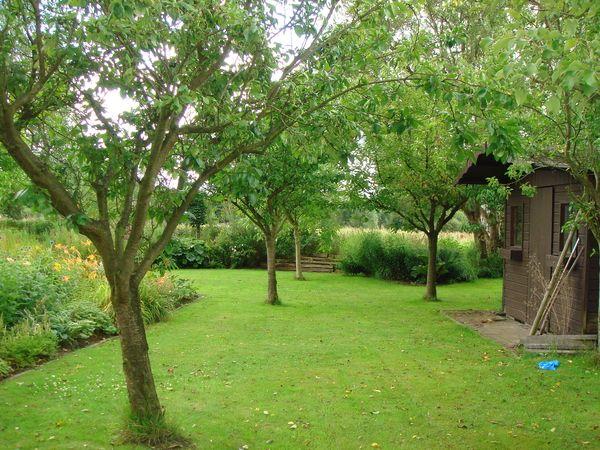 Beste fruitbomen in tuin - Google zoeken (met afbeeldingen) | Fruitboom EM-08