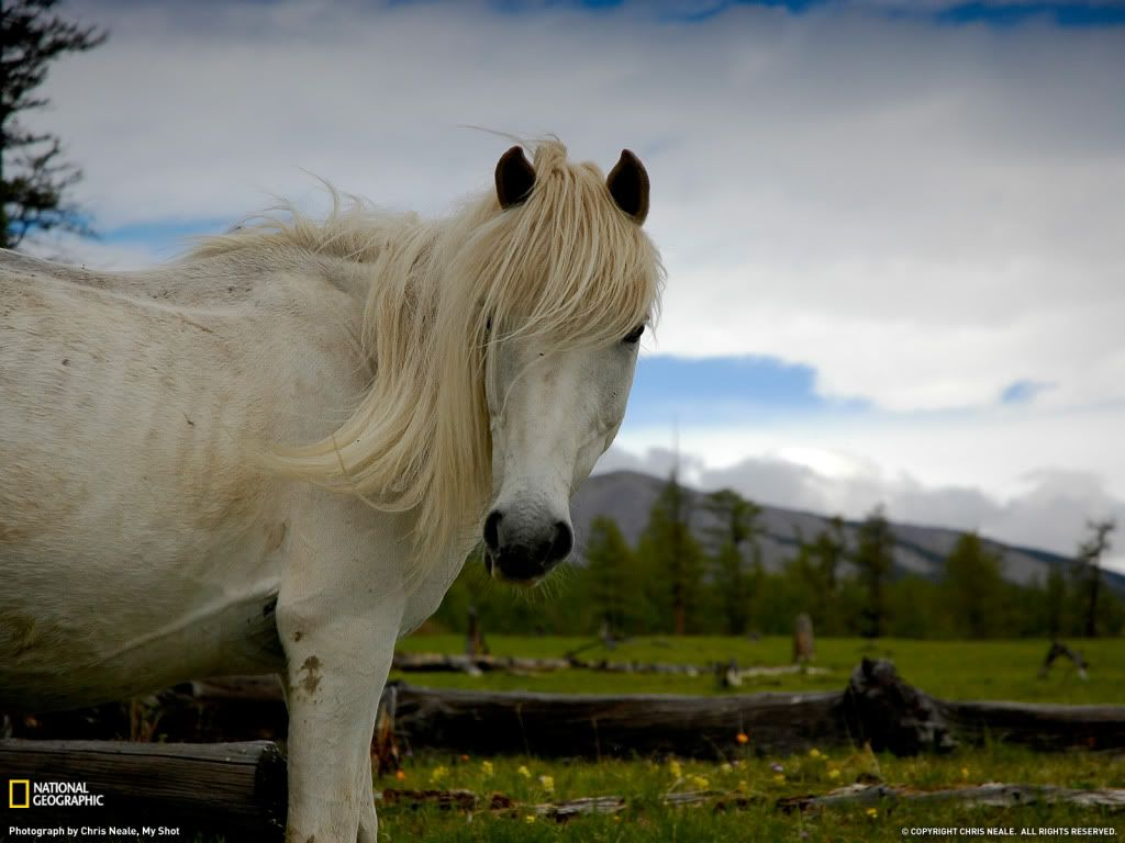 Wonderful Wallpaper Horse National Geographic - a775f102d2e2dd3de2af4a2a0f11709d  Best Photo Reference_355749.jpg