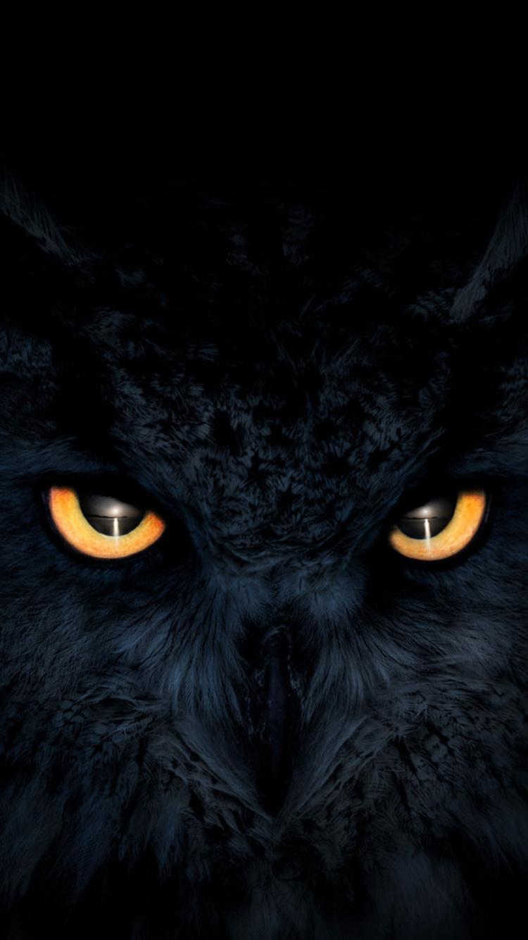 Download 750x1334 wallpaper owl, dark, glowing eyes ...
