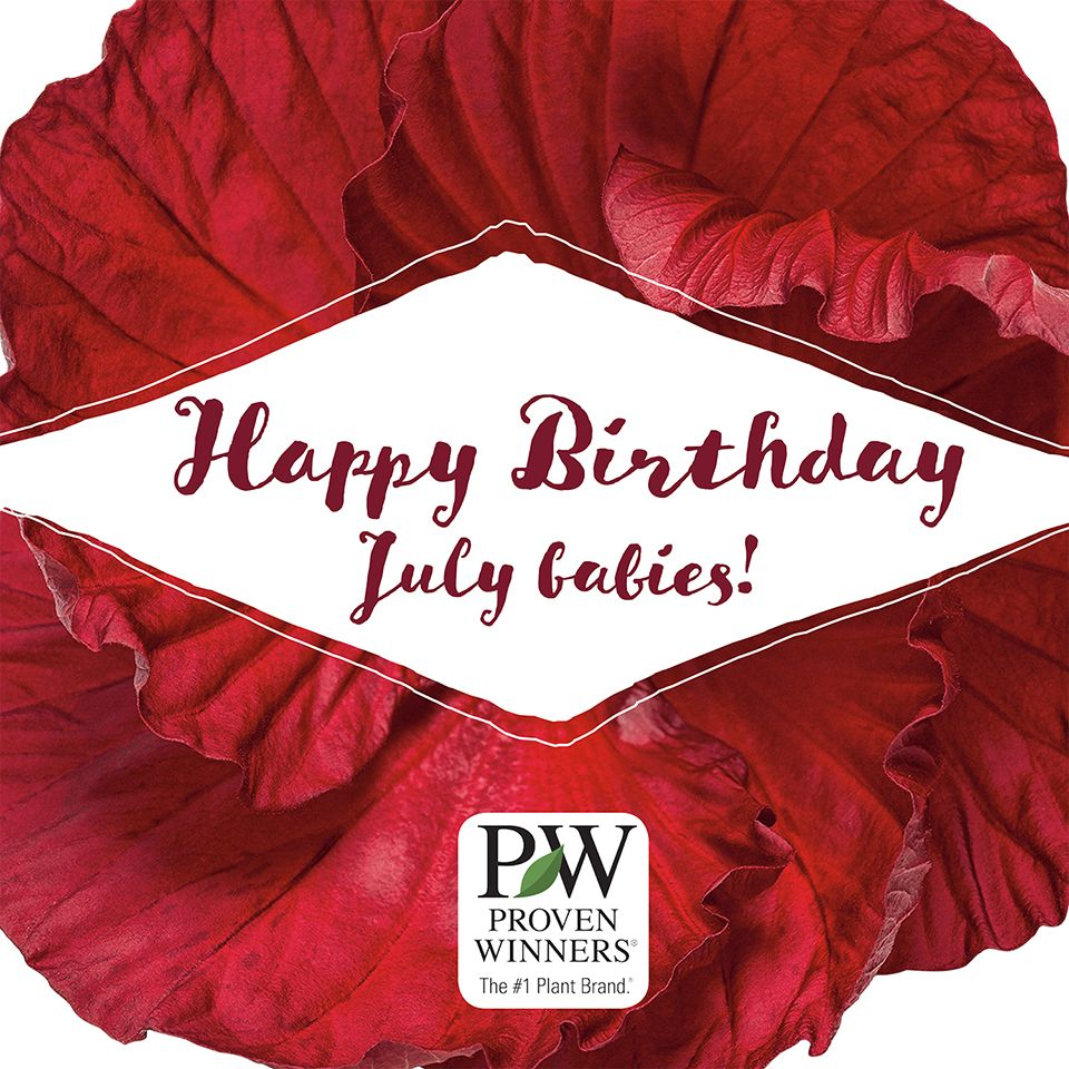 The color for July is Ruby Red! | Birth Month Flowers | Pinterest ...