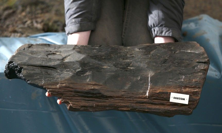A piece of timber from a house, unearthed by archaeologists is displayed by a member of the University of Cambridge Archaeological Unit, who are uncovering Bronze Age wooden houses, preserved in silt, from a quarry near Peterborough, Britain