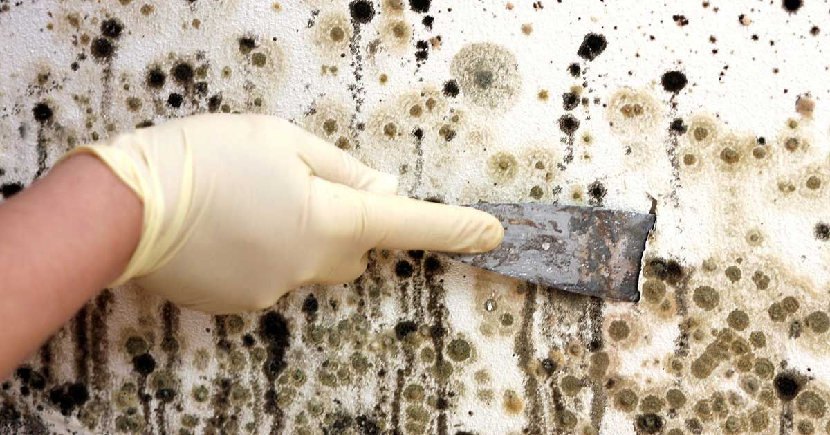 Mold can be the cause of a whole host of health problems