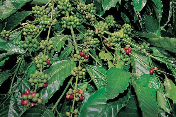 Spice plantation in Kerala