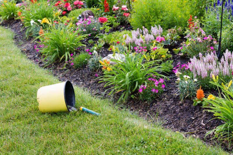 Какие цветы посадить на клумбе и как это сделать красиво в ...