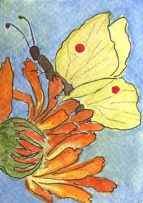 ACEO Lemon Butterfly, WC  Ink Painting by Seija BUTTERFLIES,NATURE