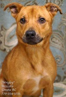 A 16caspera037631pic1 Jpg Dog Adoption Petsmart Dog Dogs