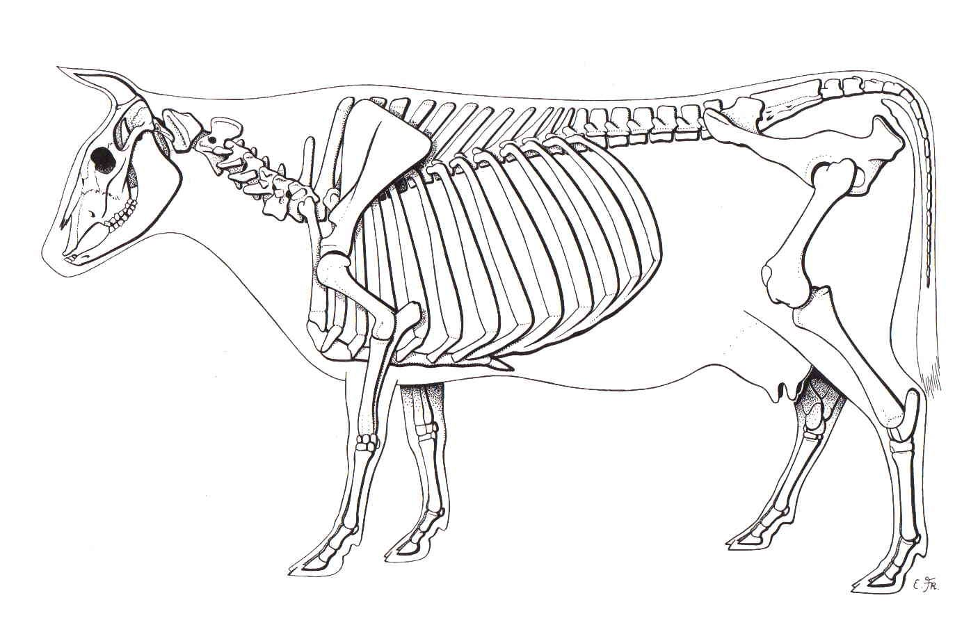 diagram drawing  [ 1396 x 909 Pixel ]