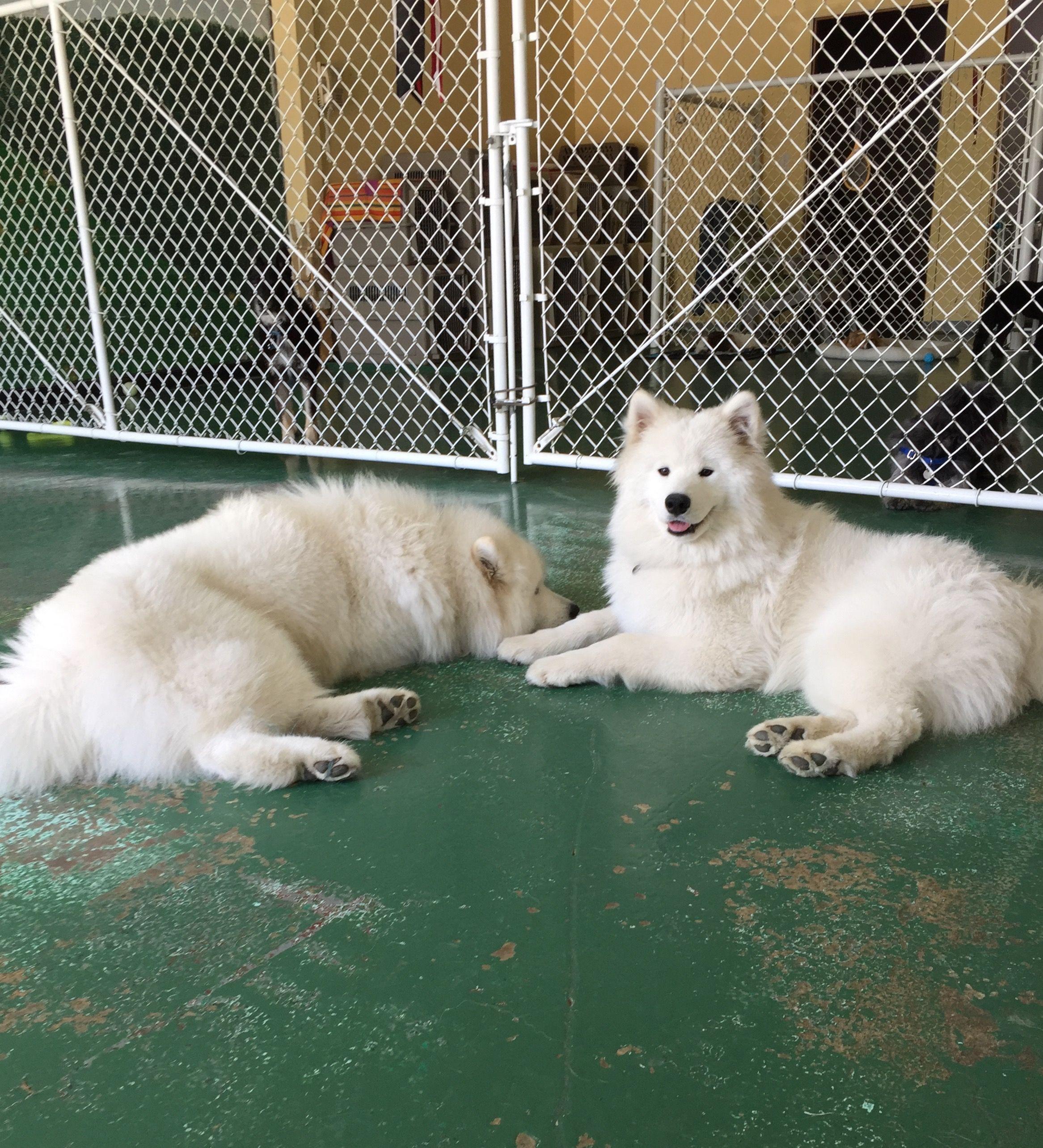 Loki & Barley, our Profile Doggies of the Week ◆ www.arfnbark.com & www.facebook.com/arfnbarkpdx