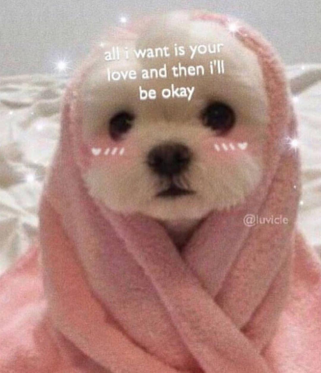 i feel the worst i've felt in a while 🏼 Cute memes, Cute